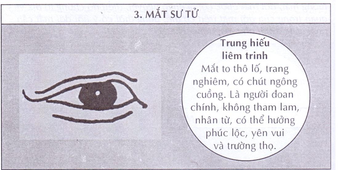 Mắt sư tử